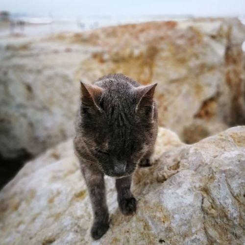Shore cat Cat Tel Aviv Israel depth of field Blur Furry Pets Domestic Cat Feline Animal Themes Close-up
