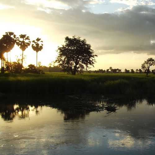 Reflection Water Tree Sunset Sky Nature Landscape Travel Natural Parkland Ecosystem  No People Outdoors Horizon Over Water