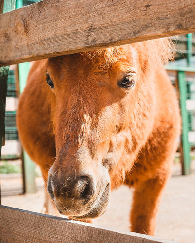 Close-up of horse in pen