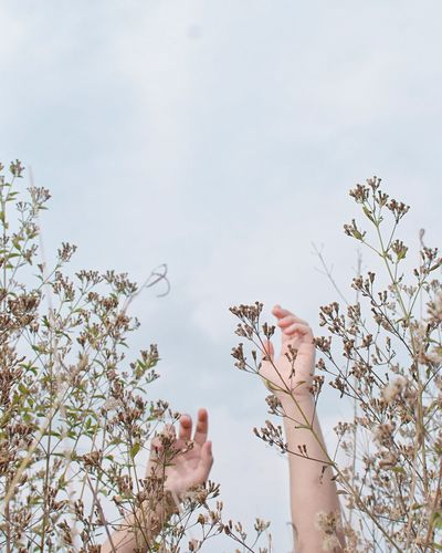 Cropped hands of person amidst plants against sky