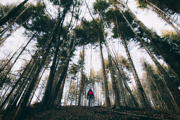 Low angle view of hiker walking in forest against sky