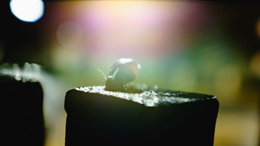 snail at night Animal Bokeh Close-up Night No People Rain Snail Snail🐌 Urban Nature X100S