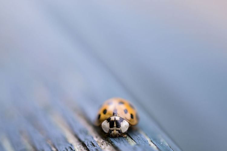 Close-up of ladybug on wood
