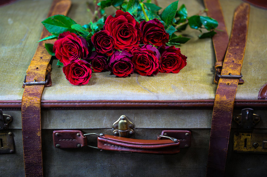 Rose On Old Suitcase Rosé Rose - Flower Flower Plant Flowering Plant Beauty In Nature Table No People Close-up Red High Angle View Indoors  Still Life Freshness Scissors Emotion Focus On Foreground Nature Arrangement Fragility Flower Head Bouquet Flower Arrangement