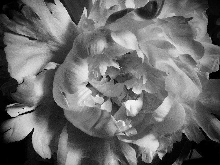 Flowerforfriends Monochrome Blackandwhite Flowerporn