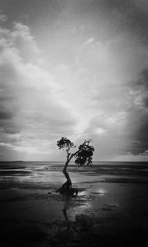 😚 Two Is Better Than One Sea Beach Horizon Over Water Water Tranquil Scene Scenics Sky Tranquility Shore Cloud - Sky Tree Beauty In Nature Tourism Vacations Travel Destinations Wave Nature Majestic Calm Seascape Shekelsphotography Fresh On Eyeem  Monochrome Photography
