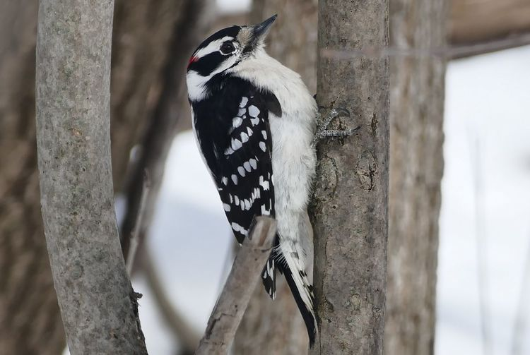 Close-up of woodpecker perching on plant stem
