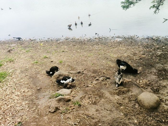 Duck Patos Check This Out Escaping Walking Around EyeEmBestPics