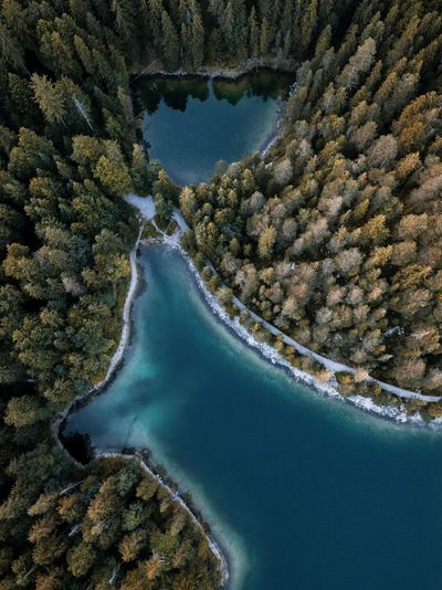 Autumn Eibsee The Week On EyeEm Aerial Beauty In Nature Close-up Day Dog Forest Germany Lake Nature No People Outdoors Physical Geography Scenics Sea Sky Tree Water