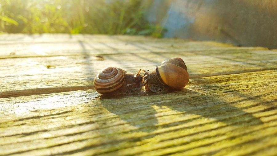 Check This Out Taking Photos Nature On Your Doorstep Snail🐌 Snail ❤ Snailfriend Love To Take Photos ❤ Morning Light