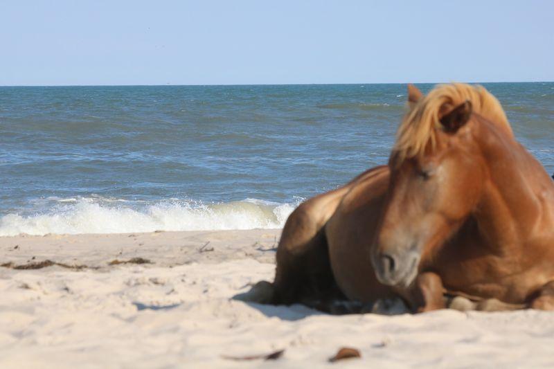 Horses Ocean