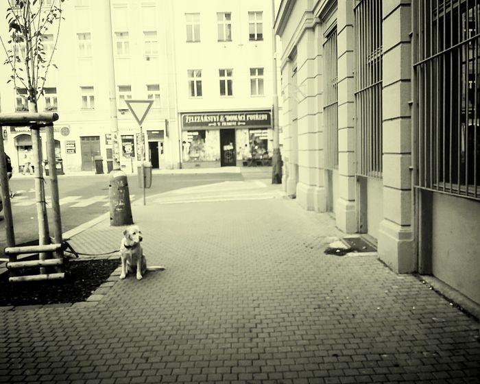 Dog Wait Building Exterior