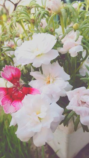 50 tons de branco 1 ton de rosa