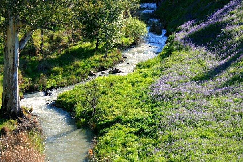 Countryside Creek Wildflowers A Place To Breathe