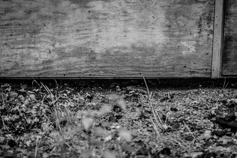 Only slightly ajar was this old door that was not opened in a very long time. This slight crack was enough to see there is nothing in there. Not anymore. via http://www.rhme.de/under-the-door/ Blackandwhite Curiosity #rhme Nikon