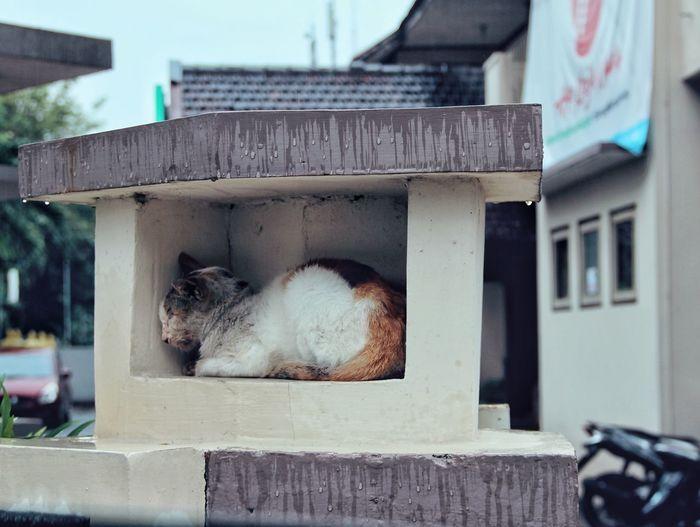 Cat sleeping outside building