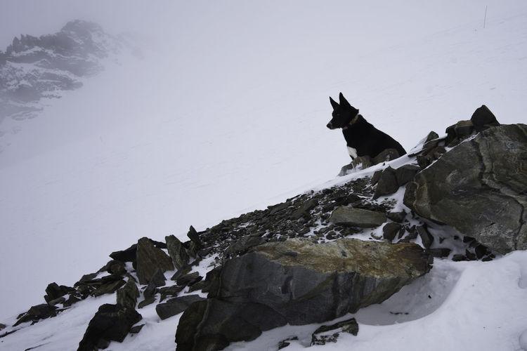 Dog sitting on rock during winter