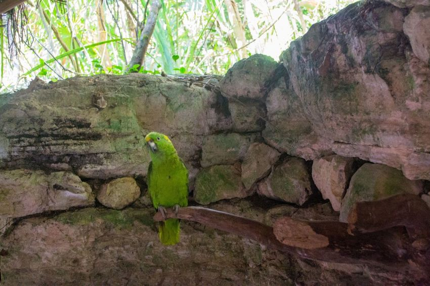 Green Parrot Attraction In Mexico Authentic Mexican Food Friendlylocalguides Green Holidays Mexico National Landmark Park Parrot Pyramid Things To Do Vacation What To See In Mexico Where To Go Xcaret