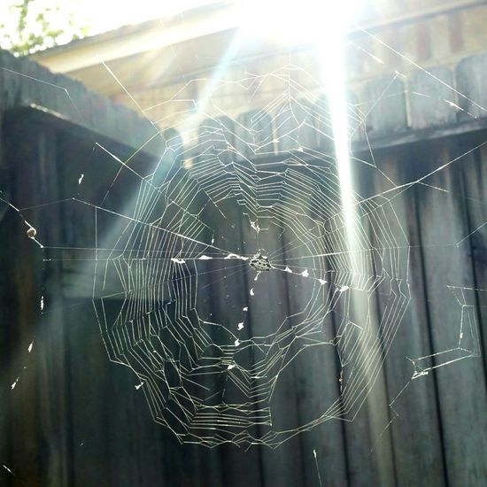 A Sunday sun snap. Spider Web Fragility Close-up Day Nature Outdoors Web EyeEm Gallery Photography Eyemphotos Popular Photos Nature_collection EyeEm Nature Lover EyeEm Best Shots Sunrays Spider Spiny Orb Weaver Thingsinmybackyard What Who Where
