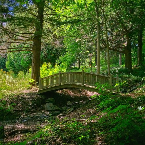 A quiet spot EyeEm Nature Lover Mobilephotography A Walk In The Woods Wooden Bridge Trees Sunlight And Shadow IPSScenery Fine Art Photography