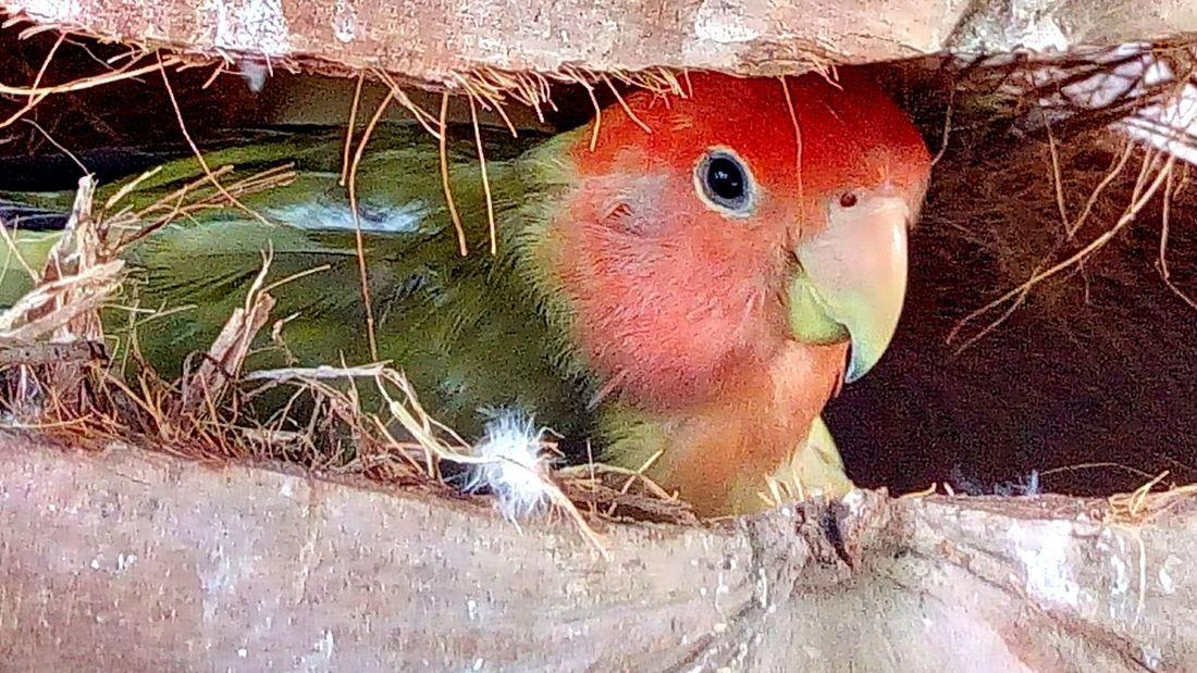 Birds_collection Bird Bird In The Zoo Nest Bird Nest