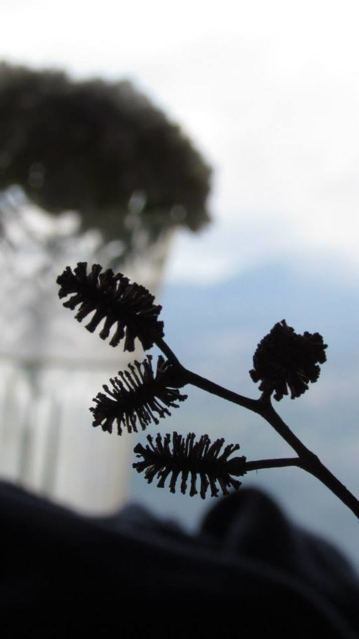 nature, plant, growth, no people, outdoors, close-up, day, fragility, beauty in nature, tree, flower, sky