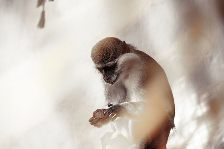 Low angle view of monkey standing outdoors