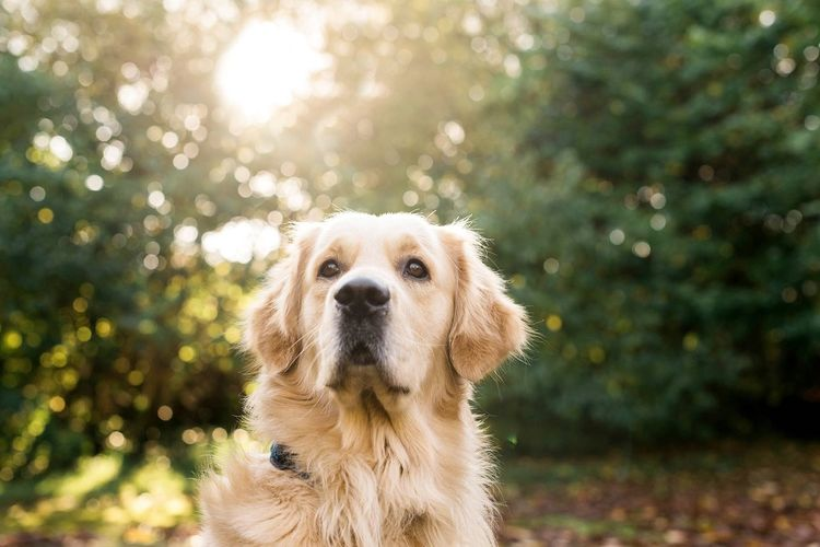 Dog One Animal Portrait Domestic Animals First Eyeem Photo Mammal Close-up Dog Pets Nature No People Outdoors Animal Themes Golden Retriever Head Shot Sunny Winter Day Soulmate Best Friend