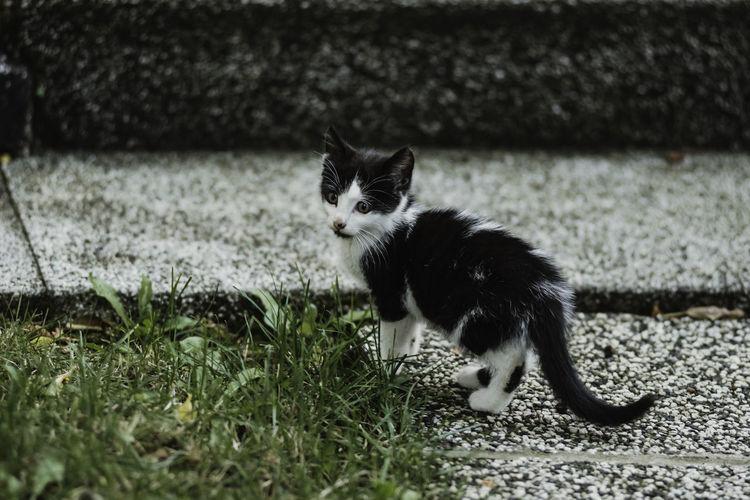 Portrait of kitten on grass