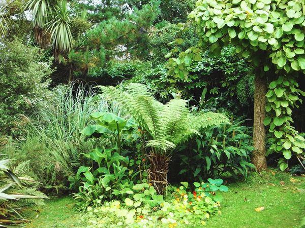 In an Irish garden Garden Garden Photography Irish Garden Tree Fern Fern Exotic Plants Mild Winter Mizen Peninsula Ireland