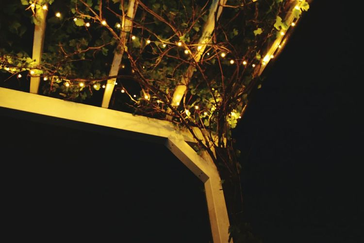 Nightlights Grape Vine Silent Night