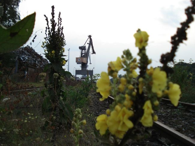Gleise Hannover Nordhafen Harbor - Crane Gelbe Blüten🌾 Hafenkran Nature No People Outdoors Scrap Yard Technology