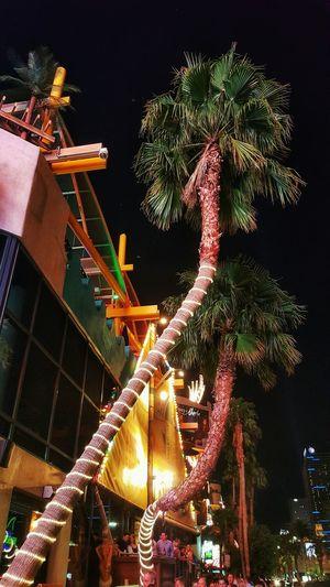Cities At Night Palm Trees Las Vegas Blvd Las Vegas At Night Las Vegas Casino
