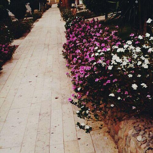 цветы весна любовь дорожка красота