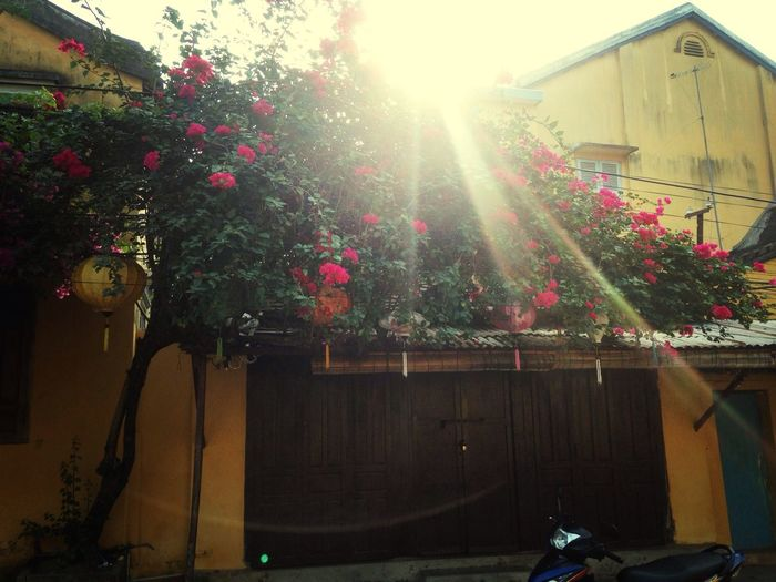 Miss my sunshine