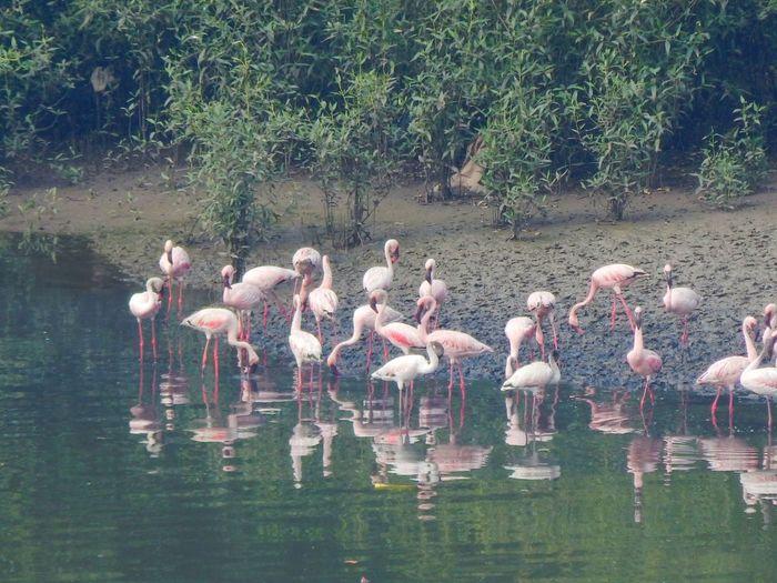 Flamingo Flamingo Bird Water Tree Lake Reflection