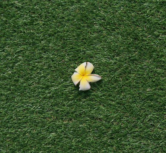 Plant Grass