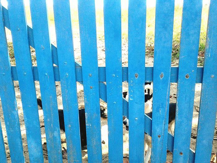 Dogs Of Door Bark Of Doors