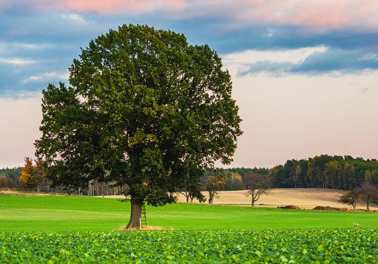 Single Tree at