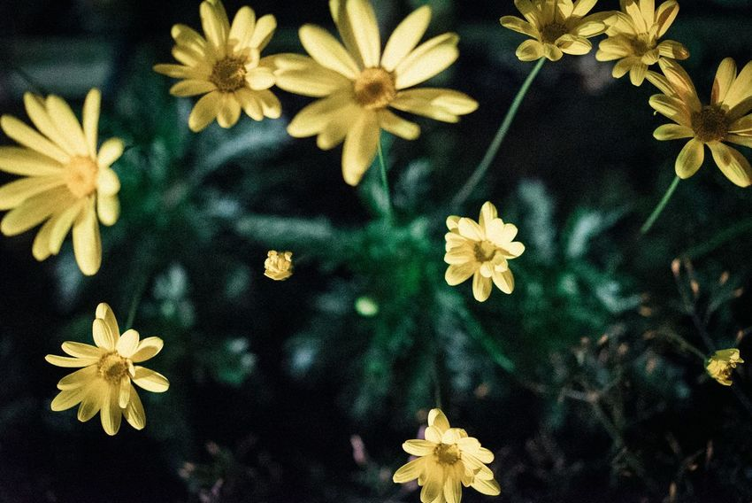 Flower Petal Flower Head Fragility Nature Growth Beauty In Nature Freshness Focus On Foreground Close-up Day Yellow No People Outdoors Plant Leaf Blooming Tree