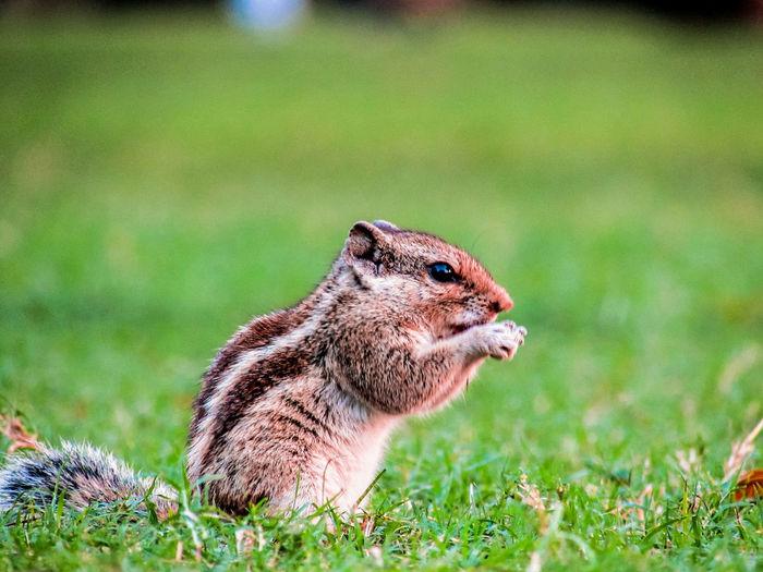 squirrel EyeEm Selects