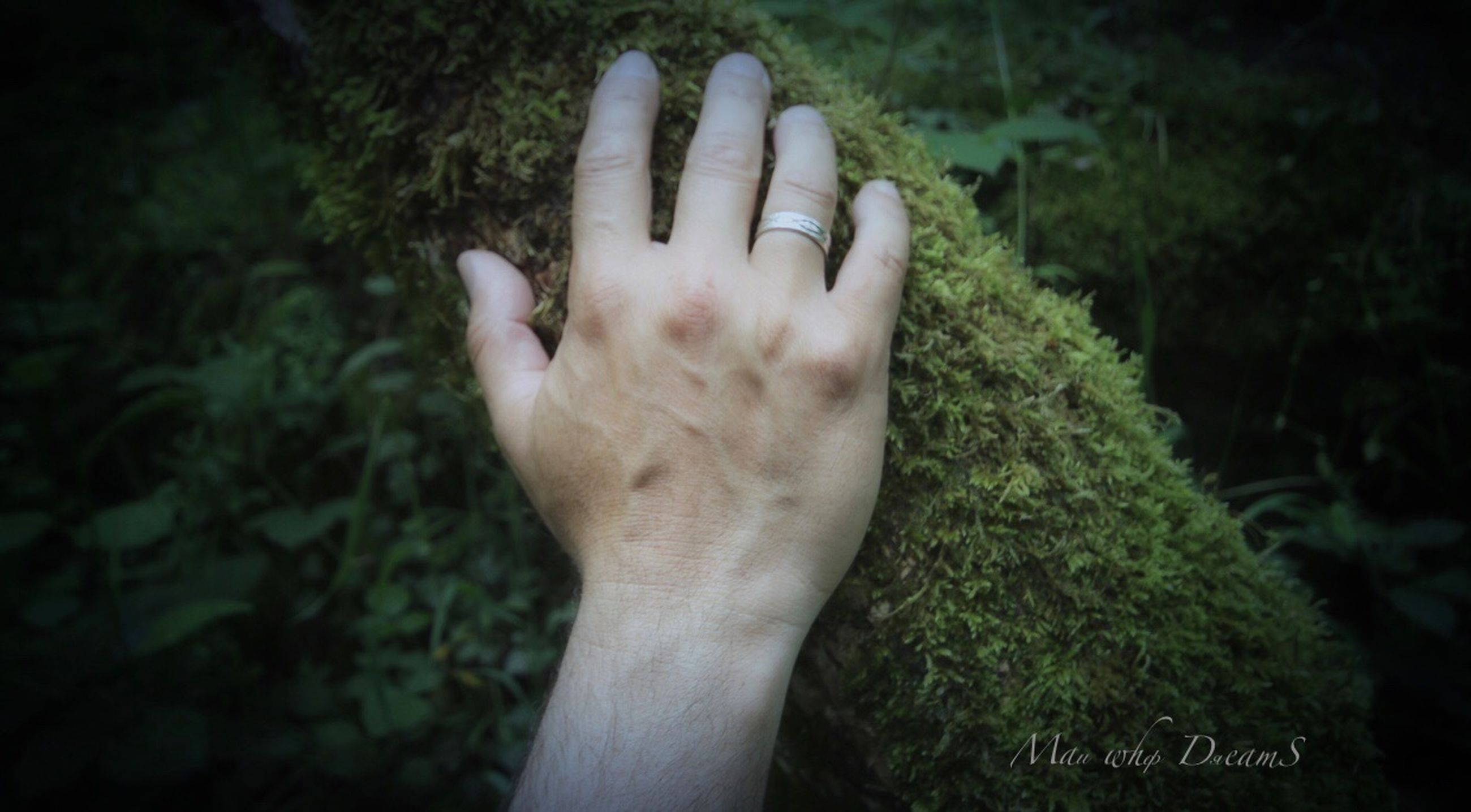 human hand, hand, human body part, one person, real people, body part, plant, personal perspective, day, human finger, lifestyles, finger, nature, focus on foreground, leisure activity, unrecognizable person, tree, close-up, outdoors