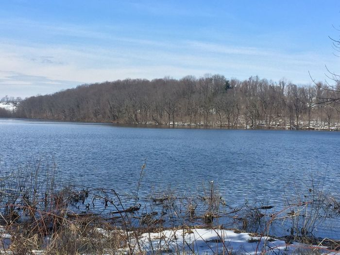 Chester county Coatesville Pennsylvania reservoir Cold Temperature Nature Tree Winter Bare Tree Snow Tranquility Beauty In Nature Tranquil Scene Water Scenics Sky No People Outdoors Frozen Growth Lake Day Coatesville Pennsylvania Pennsylvania Beauty Pennsylvania