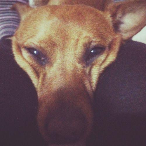 My Dog Cute I Love My Dog Animal Love