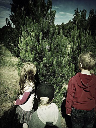 My Happy Place  picking out a tree to bring home in two weeks.. ❤️??? Tadaa Community Newzealand Summer Christmas