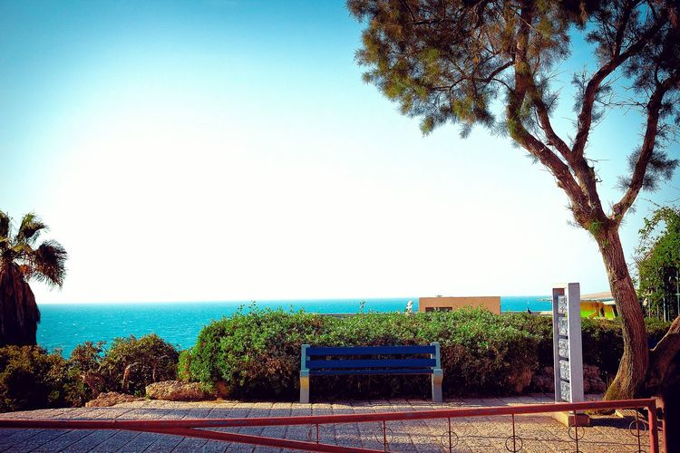 Bench Tree Israel Telaviv Tel-aviv Blue Sky Clear Sky Panorama Sea Coast Summer Sunshine Road