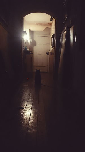 Black cat Architecture Building Cat City Life Corridor Corridors  Dark Dark Day Full Length Illuminated Leisure Activity Lifestyles The Way Forward Tunnel Unrecognizable Person
