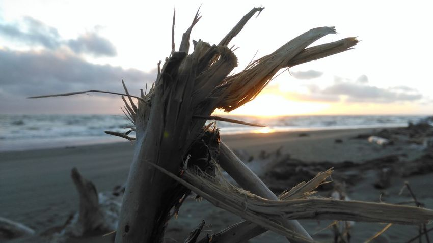 Colorphotography Sunlight At,sunset Waves Crashing Blurredbackground Driftwood Beauty In Nature Hello World ✌ Check This Out