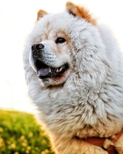 EyeEm Selects Pets Portrait Dog Close-up
