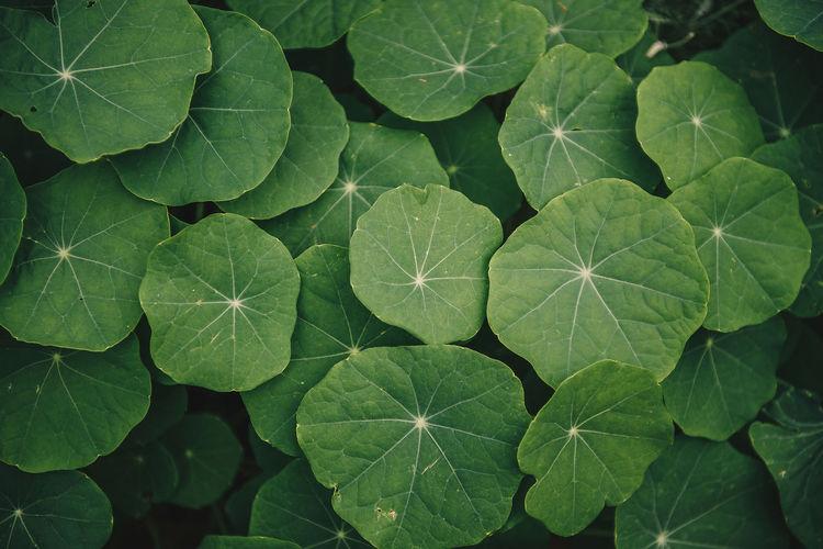 plant part